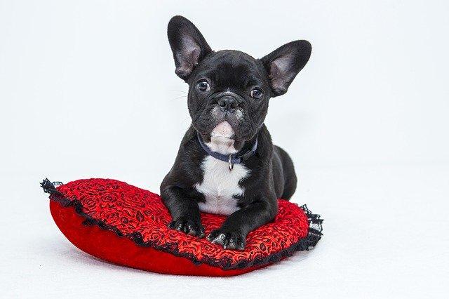 יונימל: אתר אביזרים לכלבים שכל בעל כלב צריך להכיר